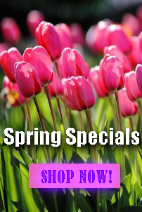 SPECIAL OFFERS - shop now!